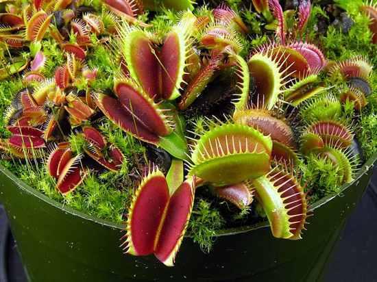 Las 10 plantas carn voras de insectos m s fascinantes for Que se planta en septiembre