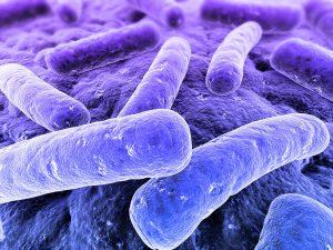 legionella-bacteria