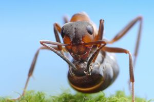 fire-ant-camping